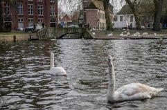 2015 Belgique Bruges