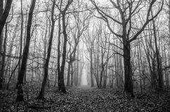 Foret Chambourcy sous la brume