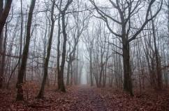 forêt sous la brume