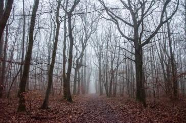 20161219 forêt sous la brume 2
