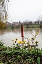 20171217 bords de Marne fleurs