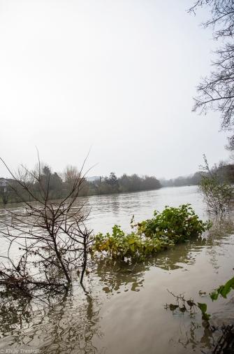 20171217 bords de Marne pieds dans leau