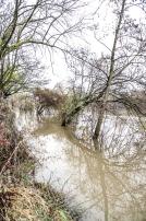 20171217 bords de Marne pieds dans leau6