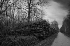 Forêt et tas de bois